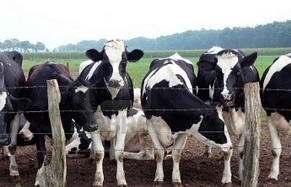 Latte e Zootecnia